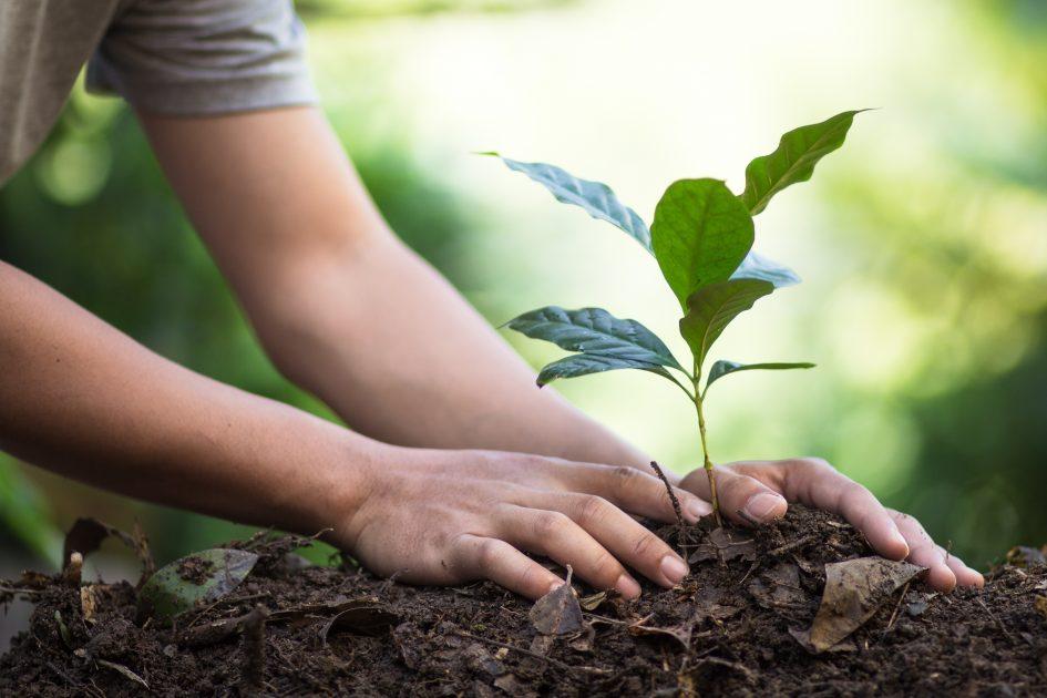 nature, environnement, plante